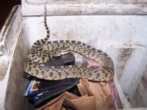 snake 019